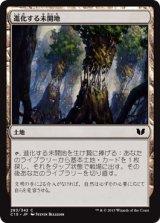 進化する未開地/Evolving Wilds 【日本語版】[C15-茶C]