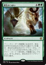 野生のつがい/Wild Pair 【日本語版】 [CN2-緑R]