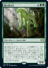 【予約】絡み森の主/Liege of the Tangle 【日本語版】 [2XM-緑R]