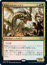 野蛮生まれのハイドラ/Savageborn Hydra 【日本語版】 [2XM-金R]