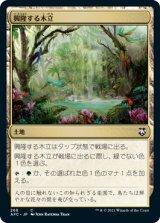 興隆する木立/Thriving Grove 【日本語版】 [AFC-土地C]