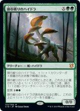 頭巾被りのハイドラ/Hooded Hydra 【日本語版】 [C19-緑MR]《状態:NM》
