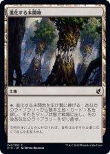 進化する未開地/Evolving Wilds 【日本語版】 [C19-土地C]