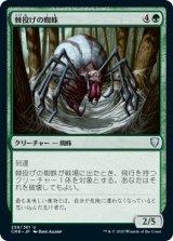 棘投げの蜘蛛/Stingerfling Spider 【日本語版】 [CMR-緑U]