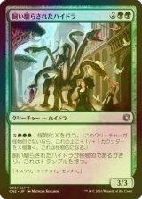 [FOIL] 飼い馴らされたハイドラ/Domesticated Hydra 【日本語版】 [CN2-緑U]