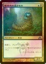 [FOIL] 植林地を這うもの/Woodlot Crawler 【日本語版】 [DGM-金U]