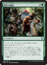 野生の猛攻/Wild Onslaught 【日本語版】  [DOM-緑U]