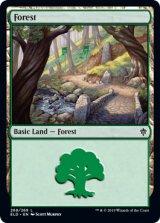 森/Forest No.268 【英語版】 [ELD-土地C]《状態:NM》