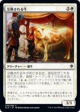 交換される牛/Bartered Cow 【日本語版】 [ELD-白C]《状態:NM》