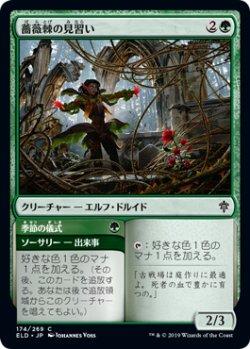 画像1: 薔薇棘の見習い/Rosethorn Acolyte 【日本語版】 [ELD-緑C]