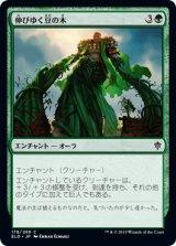 伸びゆく豆の木/Tall as a Beanstalk 【日本語版】 [ELD-緑C]《状態:NM》
