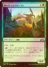 [FOIL] 絡み合うモウセンゴケ/Grappling Sundew 【日本語版】 [GRN-緑U]