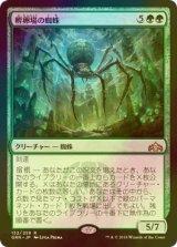 [FOIL] 孵卵場の蜘蛛/Hatchery Spider 【日本語版】 [GRN-緑R]