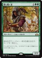 獣に囁く者/Beast Whisperer 【日本語版】  [GRN-緑R]《状態:NM》
