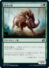 逆毛の猪/Bristling Boar 【日本語版】 [IKO-緑C]《状態:NM》