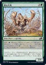 渡る大角/Migratory Greathorn 【日本語版】 [IKO-緑C]《状態:NM》