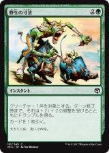 野生の寸法/Wildsize 【日本語版】 [IMA-緑C]