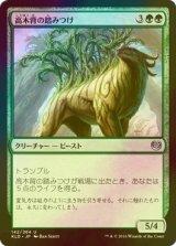 [FOIL] 高木背の踏みつけ/Arborback Stomper 【日本語版】 [KLD-緑U]
