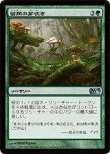 菌類の芽吹き/Fungal Sprouting 【日本語版】 [M13-緑U]