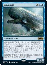 追われる鯨/Pursued Whale 【日本語版】 [M21-青R]