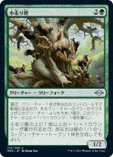 小走り樫/Scurry Oak 【日本語版】 [MH2-緑U]