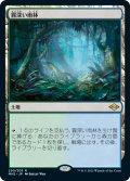 霧深い雨林/Misty Rainforest 【日本語版】 [MH2-土地R]