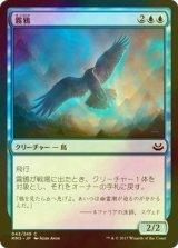 [FOIL] 霧鴉/Mist Raven 【日本語版】 [MM3-青C]