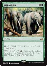 獣群の呼び声/Call of the Herd 【日本語版】 [MM3-緑R]