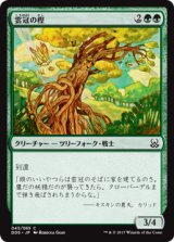 雲冠の樫/Cloudcrown Oak 【日本語版】 [MVM-緑C]