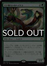 マナ喰らいのハイドラ/Managorger Hydra 【日本語版】 [ORI-緑R]《状態:NM》