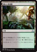 穢れた果樹園/Foul Orchard 【日本語版】[RIX-土地U]