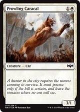 うろつくカラカル/Prowling Caracal 【英語版】  [RNA-白C]《状態:NM》