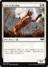 うろつくカラカル/Prowling Caracal 【日本語版】  [RNA-白C]《状態:NM》