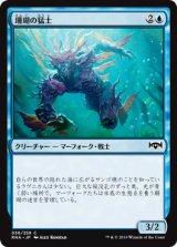 珊瑚の猛士/Coral Commando 【日本語版】  [RNA-青C]《状態:NM》