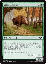 縄張り持ちの猪/Territorial Boar 【日本語版】  [RNA-緑C]《状態:NM》