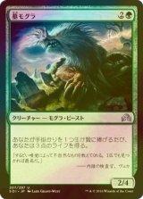 [FOIL] 墓モグラ/Graf Mole 【日本語版】 [SOI-緑U]