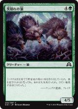 茨隠れの狼/Thornhide Wolves 【日本語版】 [SOI-緑C]