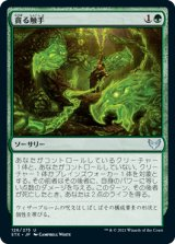 貪る触手/Devouring Tendrils 【日本語版】 [STX-緑U]