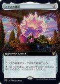 ニクスの睡蓮/Nyx Lotus (拡張アート版) 【日本語版】 [THB-灰R]《状態:NM》
