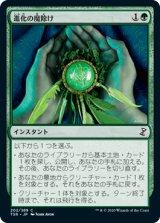 進化の魔除け/Evolution Charm 【日本語版】 [TSR-緑C]