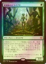 [FOIL] 老樹林のドライアド/Old-Growth Dryads 【日本語版】 [XLN-緑R]