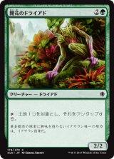 開花のドライアド/Blossom Dryad 【日本語版】 [XLN-緑C]