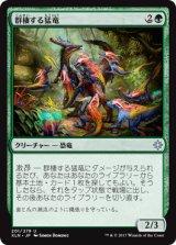 群棲する猛竜/Ranging Raptors 【日本語版】 [XLN-緑U]