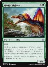 噛み付く帆背びれ/Snapping Sailback 【日本語版】 [XLN-緑U]