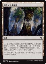 進化する未開地/Evolving Wilds 【日本語版】 [ZVE-茶C]《状態:NM》